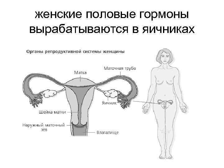 Искусственные женские сексуальные гормоны эта