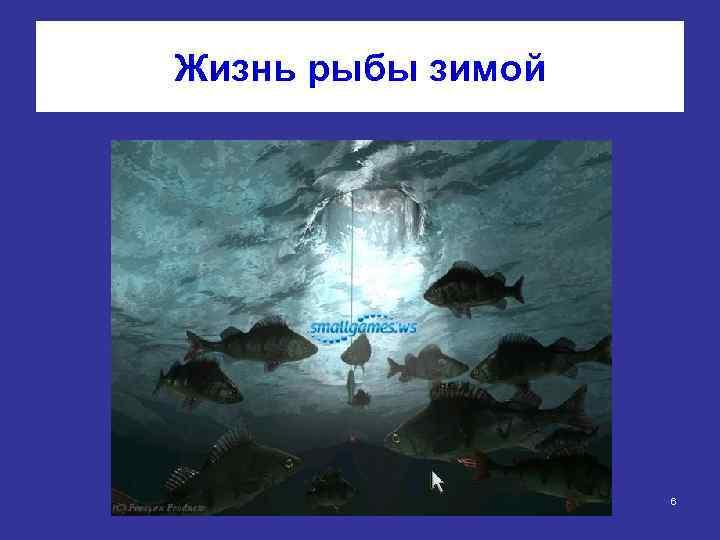Жизнь рыбы зимой 6
