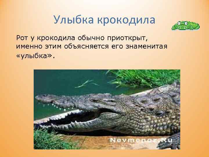 Улыбка крокодила Рот у крокодила обычно приоткрыт, именно этим объясняется его знаменитая «улыбка» .