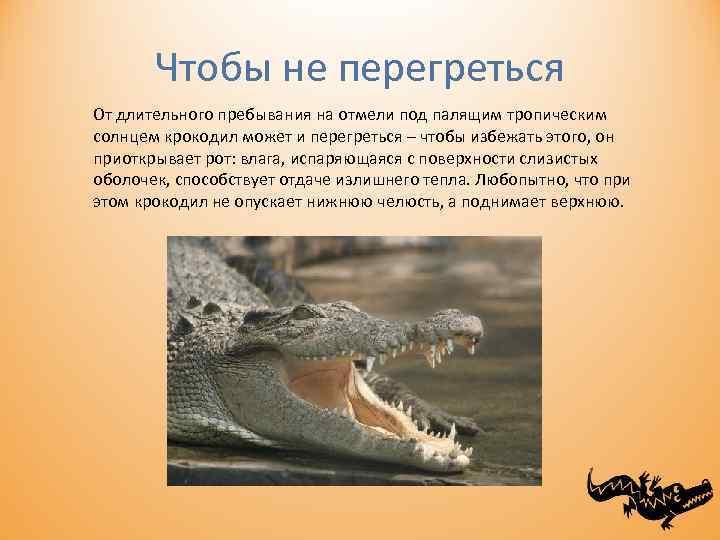 Чтобы не перегреться От длительного пребывания на отмели под палящим тропическим солнцем крокодил может