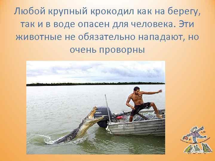 Любой крупный крокодил как на берегу, так и в воде опасен для человека. Эти