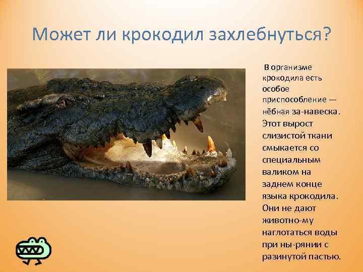 Может ли крокодил захлебнуться? В организме крокодила есть особое приспособление — нёбная за навеска.