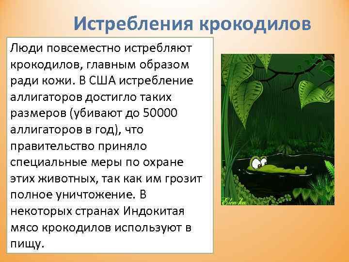 Истребления крокодилов Люди повсеместно истребляют крокодилов, главным образом ради кожи. В США истребление аллигаторов