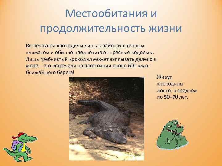 Местообитания и продолжительность жизни Встречаются крокодилы лишь в районах с теплым климатом и обычно