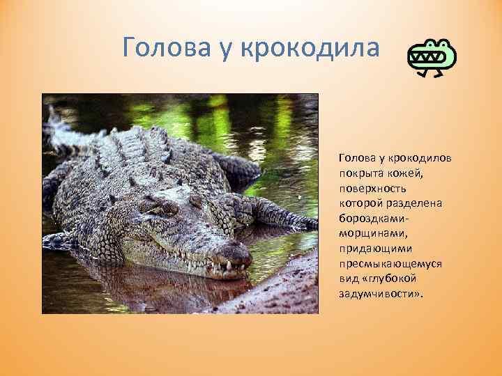 Голова у крокодила Голова у крокодилов покрыта кожей, поверхность которой разделена бороздками морщинами, придающими