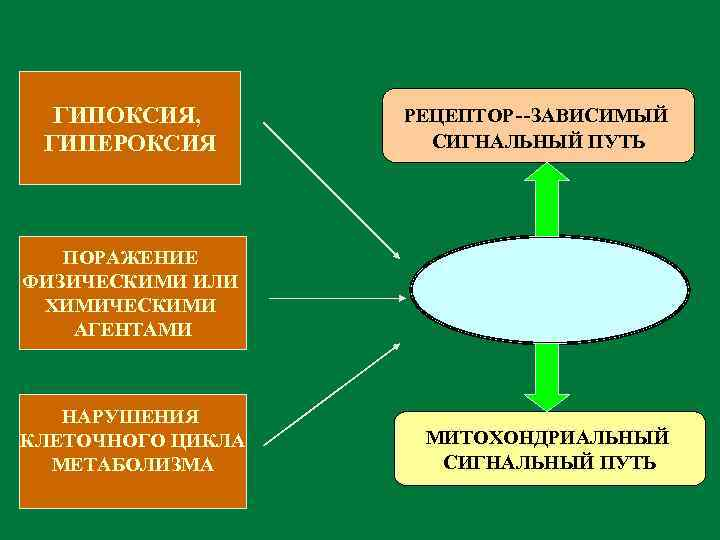 ГИПОКСИЯ, ГИПЕРОКСИЯ РЕЦЕПТОР--ЗАВИСИМЫЙ СИГНАЛЬНЫЙ ПУТЬ ПОРАЖЕНИЕ ФИЗИЧЕСКИМИ ИЛИ ХИМИЧЕСКИМИ АГЕНТАМИ НАРУШЕНИЯ КЛЕТОЧНОГО ЦИКЛА МЕТАБОЛИЗМА