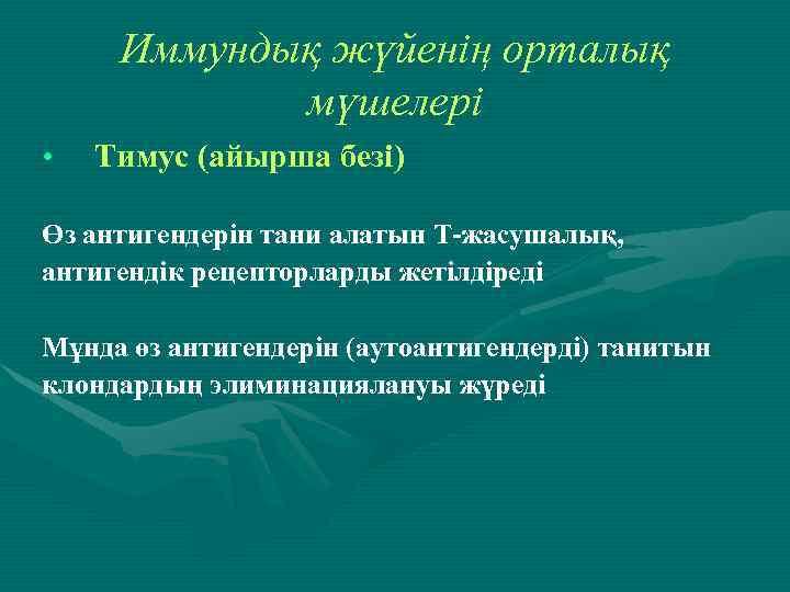 Иммундық жүйенің орталық мүшелері • Тимус (айырша безі) Өз антигендерін тани алатын Т-жасушалық, антигендік