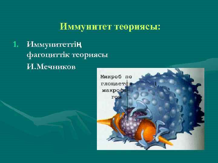 Иммунитет теориясы: 1. Иммунитеттің фагоциттік теориясы И. Мечников