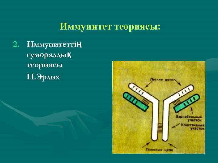 Иммунитет теориясы: 2. Иммунитеттің гуморалдық теориясы П. Эрлих