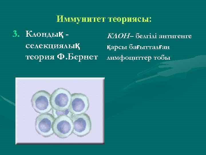Иммунитет теориясы: 3. Клондық КЛОН – белгілі антигенге селекциялық қарсы бағытталған теория Ф. Бернет