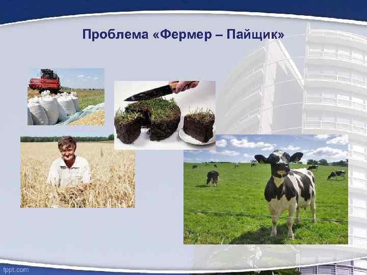 Проблема «Фермер – Пайщик»