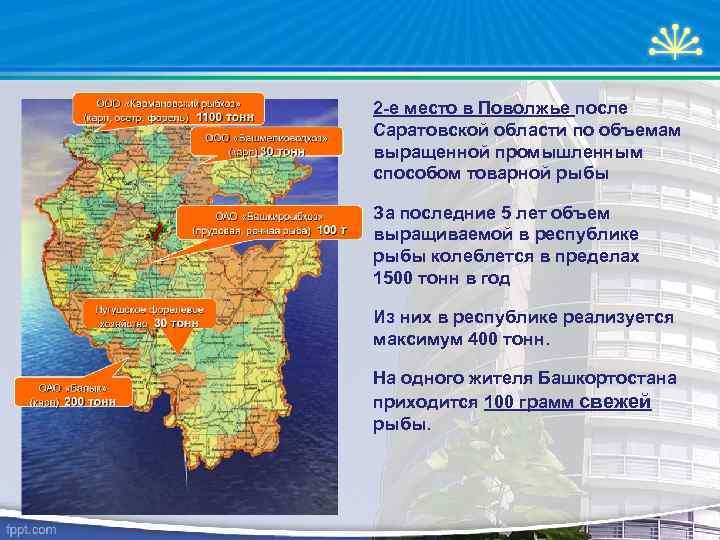 2 -е место в Поволжье после Саратовской области по объемам выращенной промышленным способом товарной