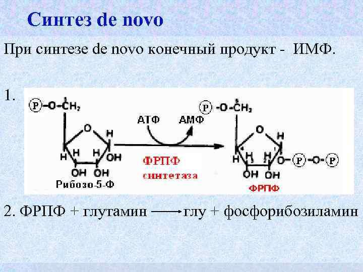 Синтез de novo При синтезе de novo конечный продукт - ИМФ.  1.