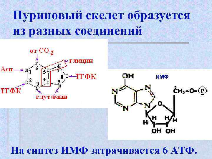Пуриновый скелет образуется из разных соединений     ИМФ На синтез ИМФ