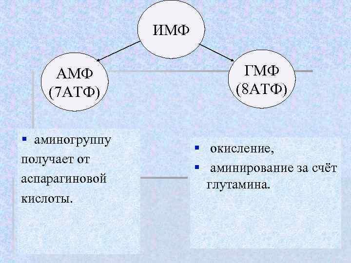 ИМФ  АМФ     ГМФ (7 АТФ)