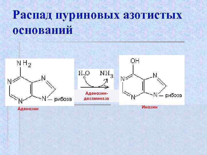 Распад пуриновых азотистых оснований    Аденозин-  дезаминаза Аденозин
