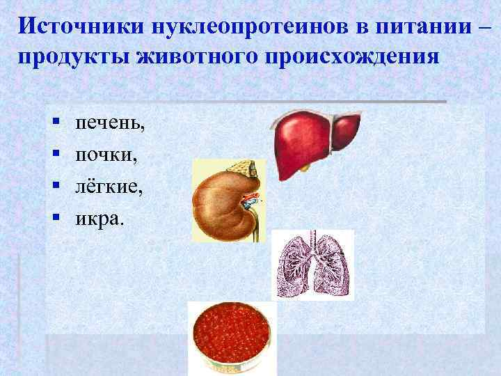 Источники нуклеопротеинов в питании – продукты животного происхождения  §  печень,  §