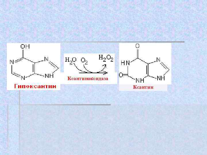 Ксантиноксидаза    Ксантин