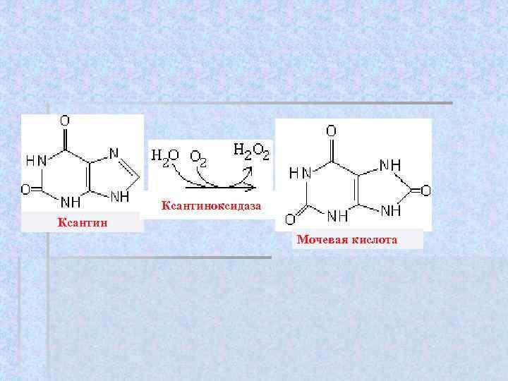 Ксантиноксидаза Ксантин     Мочевая кислота
