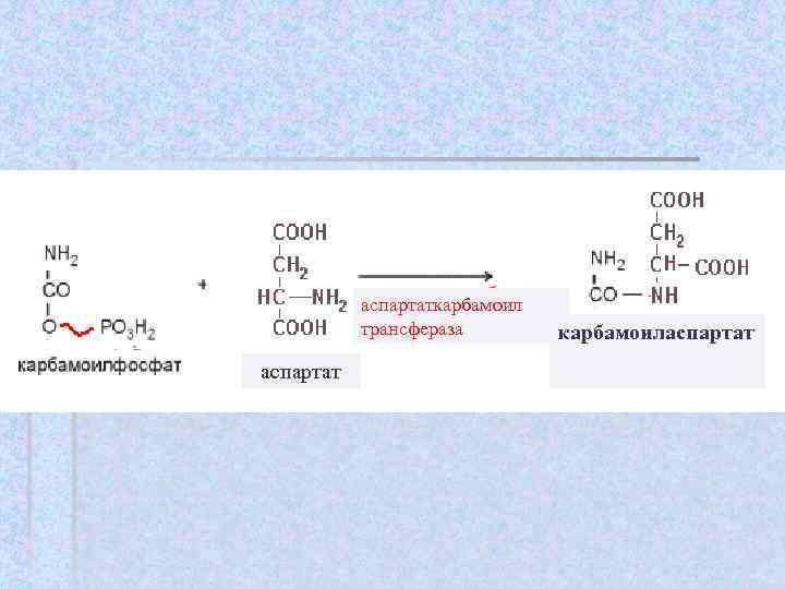 аспартаткарбамоил  трансфераза   карбамоиласпартат