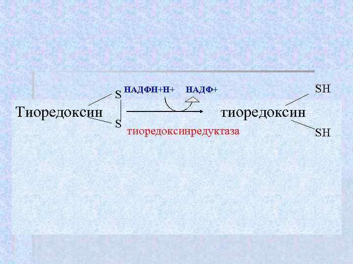 SH    S НАДФН+Н+  НАДФ+ Тиоредоксин