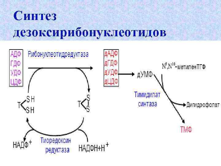 Синтез дезоксирибонуклеотидов