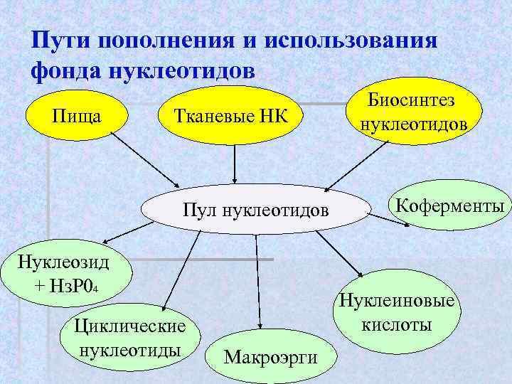 Пути пополнения и использования фонда нуклеотидов      Биосинтез