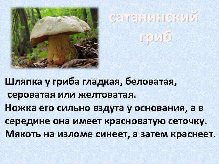 сатанинский     гриб Шляпка у гриба гладкая,