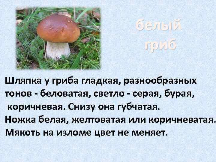 белый      гриб Шляпка у