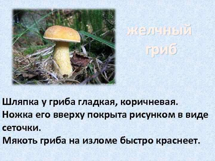 желчный      гриб  Шляпка у