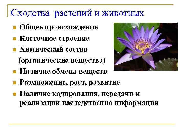 Сходства растений и животных n Общее происхождение n Клеточное строение n Химический состав