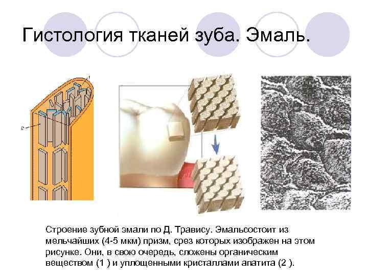 Гистология тканей зуба. Эмаль.  Строение зубной эмали по Д. Травису. Эмальсостоит из