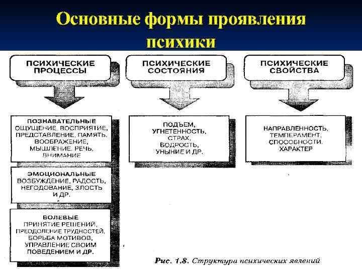 Основные формы проявления   психики