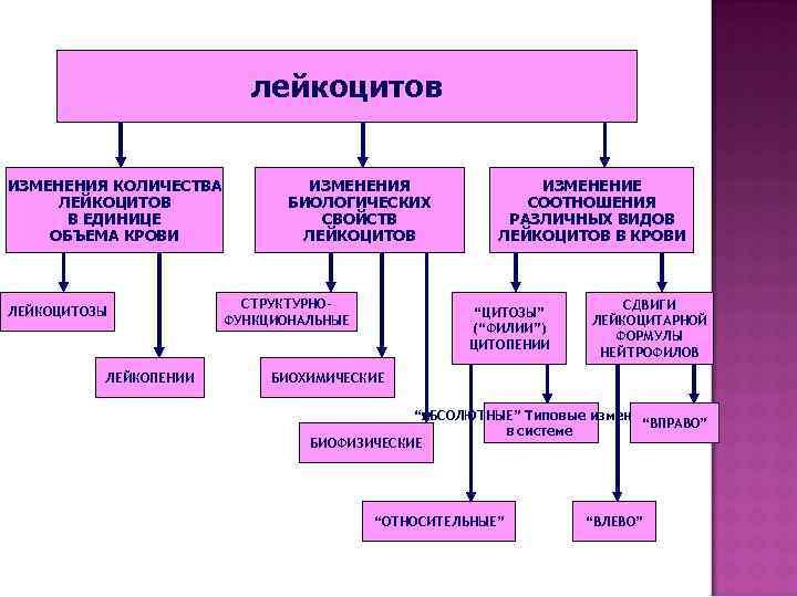 лейкоцитов  ИЗМЕНЕНИЯ КОЛИЧЕСТВА  ИЗМЕНЕНИЯ   ИЗМЕНЕНИЕ