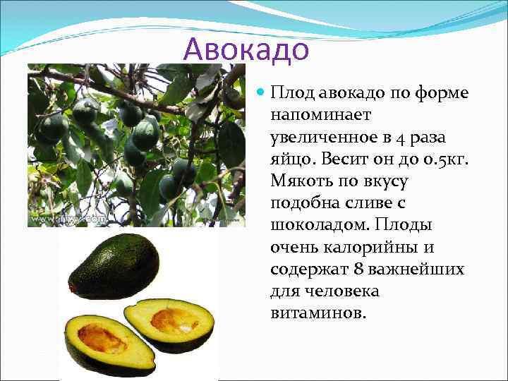 Авокадо Плод авокадо по форме напоминает увеличенное в 4 раза яйцо. Весит он до