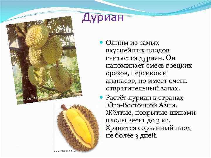 Дуриан Одним из самых вкуснейших плодов считается дуриан. Он напоминает смесь грецких орехов, персиков
