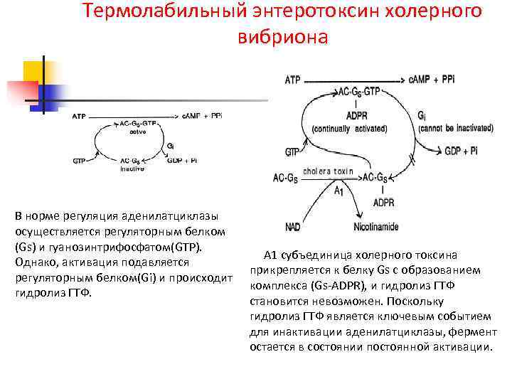 Термолабильный энтеротоксин холерного      вибриона В норме