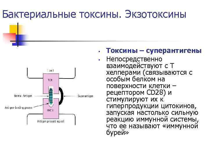 Бактериальные токсины. Экзотоксины    §  Токсины – суперантигены   §