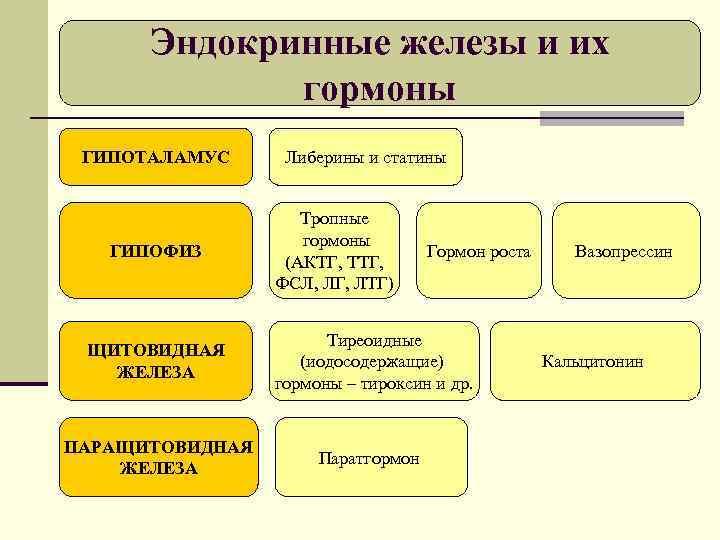 Эндокринные железы и их   гормоны ГИПОТАЛАМУС Либерины и статины