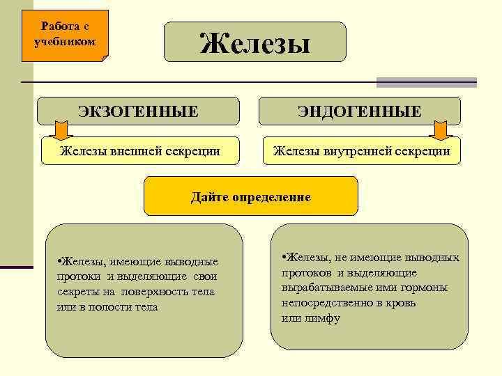 Работа с учебником      Железы  ЭКЗОГЕННЫЕ