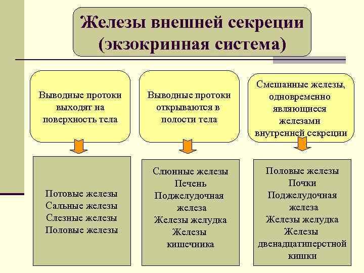 Железы внешней секреции   (экзокринная система)