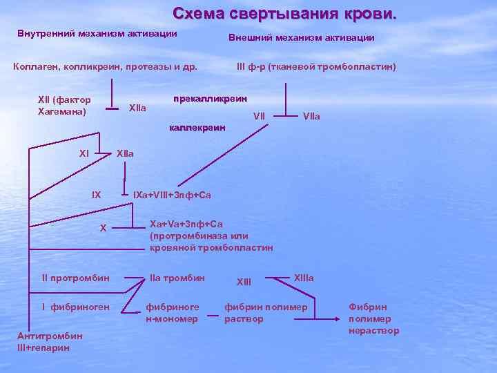 Схема свертывания крови. Внутренний механизм активации