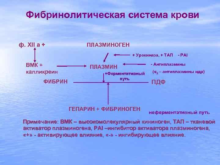 Фибринолитическая система крови ф. XII a +   ПЛАЗМИНОГЕН