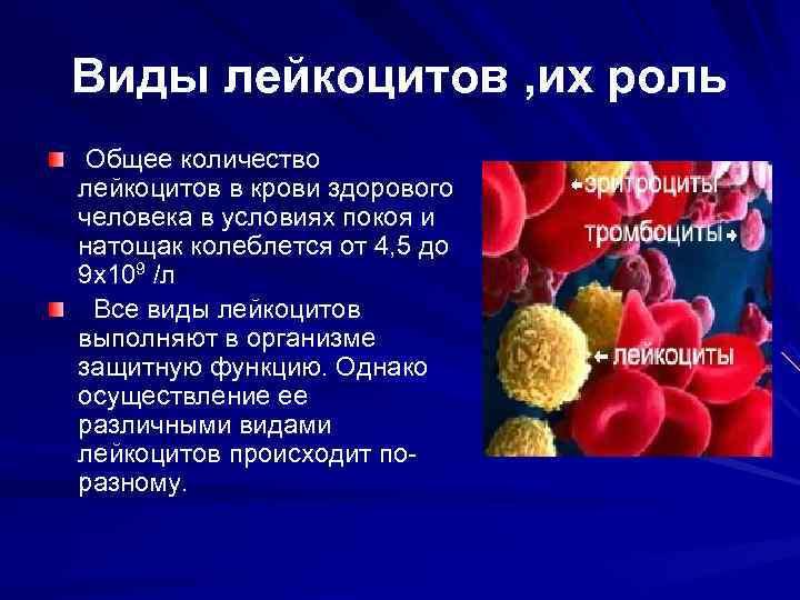 Виды лейкоцитов , их роль Общее количество лейкоцитов в крови здорового человека в условиях