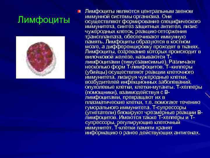 Лимфоциты являются центральным звеном   иммунной системы организма. Они Лимфоциты