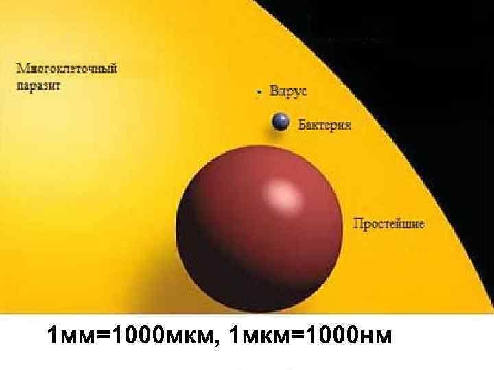 1 мм=1000 мкм, 1 мкм=1000 нм