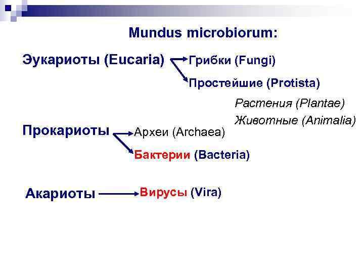 Mundus microbiorum: Эукариоты (Eucaria)  Грибки (Fungi)    Простейшие