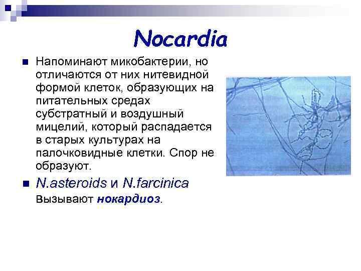 Nocardia n  Напоминают микобактерии, но отличаются от них нитевидной