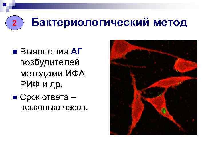 2 Бактериологический метод n  Выявления АГ возбудителей методами ИФА, РИФ и др. n