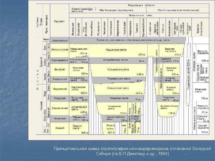 Принципиальная схема стратиграфии нижнесреднеюрских отложений Западной    Сибири (по В. П. Девятову